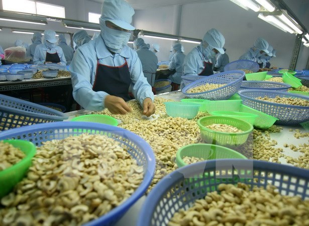 Binh Phuoc eyes more cashew products reaching global markets hinh anh 1