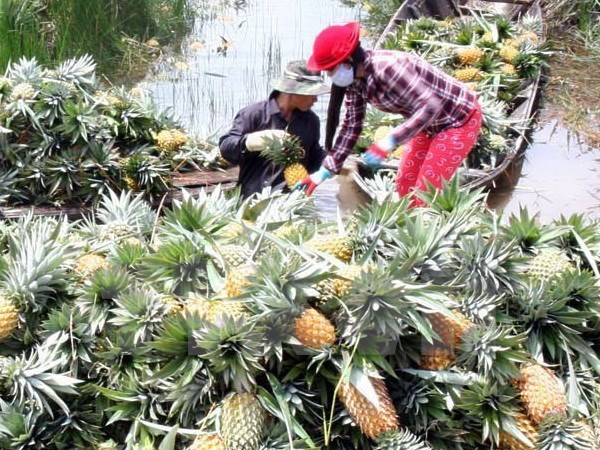 RoK agricultural firm seeks opportunities in Hau Giang hinh anh 1