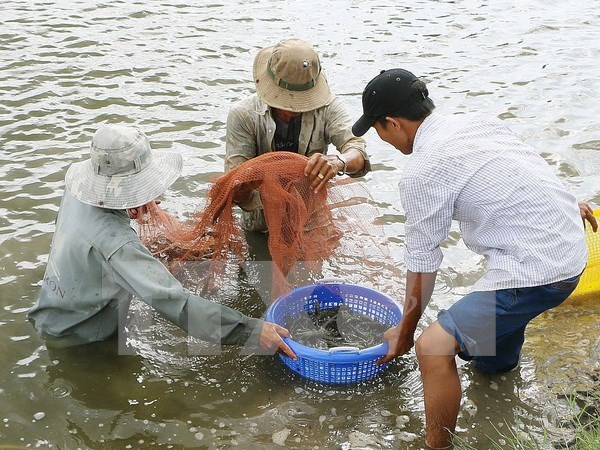 Vietnam eyes 7,000 ha of shrimp farming on sandy land by 2025 hinh anh 1