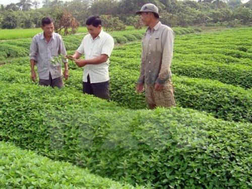 Japanese firms eye organic agriculture in An Giang hinh anh 1