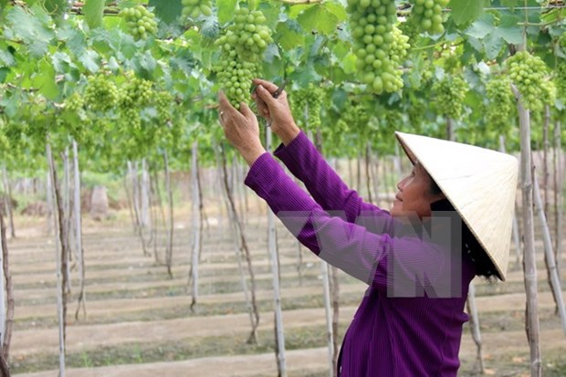 Supply chains need reforms to meet importers' strict standards hinh anh 1