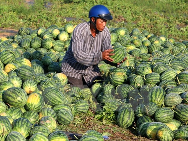 Opportunities for Vietnam's fruits, vegetables export hinh anh 1