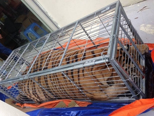 Police break wildlife trafficking ring from Nghe An to Hanoi hinh anh 1