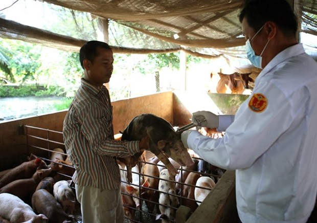 Vietnam to export pork to China, official says hinh anh 1