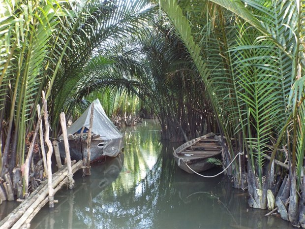 Nipa palm afforestation tour to be launched hinh anh 1