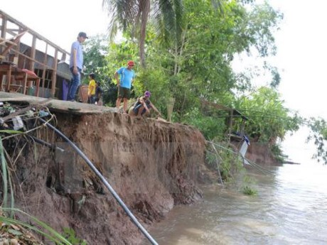 Mekong Delta struggles with erosion hinh anh 1