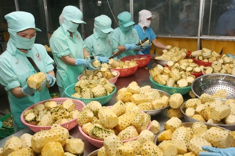 Fruit, vegetable exports hit 1.38 billion USD in five months hinh anh 1