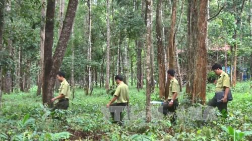 Central Highlands to plant 12,500 hectares of forest hinh anh 1