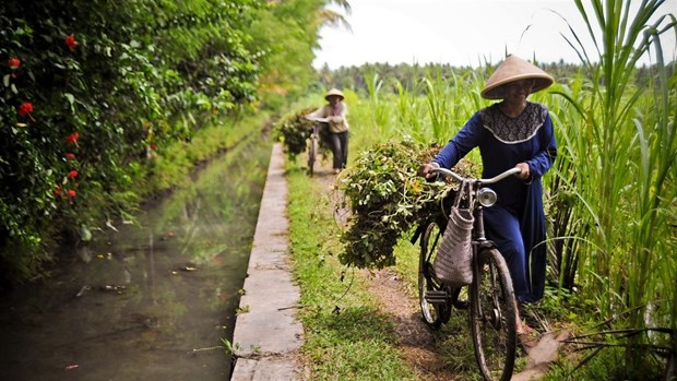 ADB helps Indonesia strengthen food security with 600 million USD loan hinh anh 1