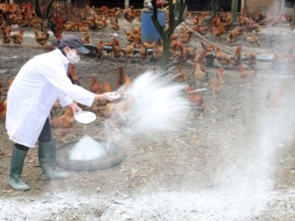 Ministry announces Vietnam free of bird flu hinh anh 1