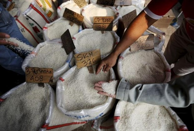 Philippines to import 250,000 tonnes of rice in June hinh anh 1