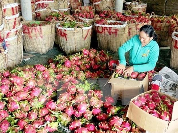 Vietnamese fruits conquer Japanese market hinh anh 1