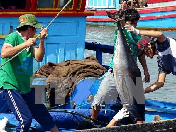 Vietnam's tuna exports witness impressive growth hinh anh 1