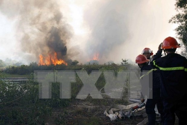 Thanh Hoa prevents forest fires during hot weather hinh anh 1