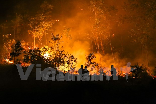Fire destroys 100ha of forest in Soc Son district hinh anh 1
