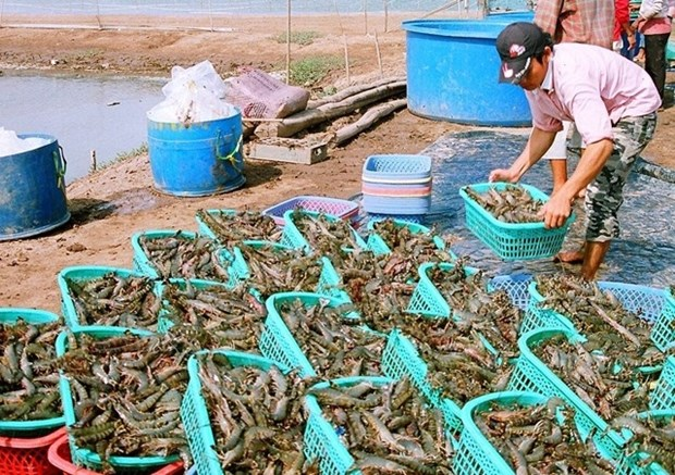 Shrimp, coffee, ginseng added to national products list hinh anh 1