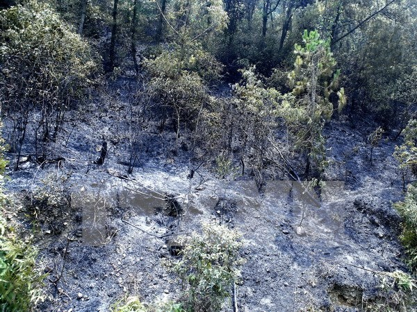 Central Highlands region faces natural forest drop hinh anh 1