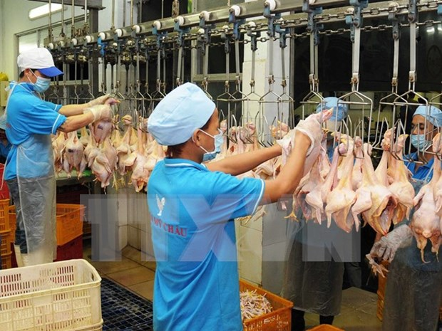 First batch of Vietnam poultry products to be sold in Japan hinh anh 1