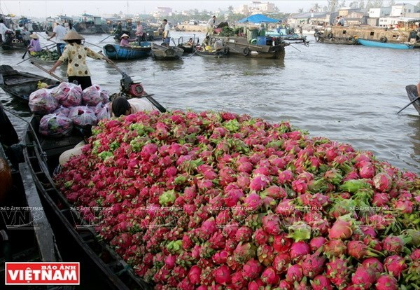 Mekong Delta's tourism sector seeks ways to take off hinh anh 1