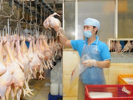VN seeks to boost livestock product exports hinh anh 1
