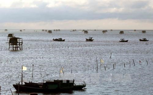First container of Vietnam's ngao oysters shipped to Italy hinh anh 1