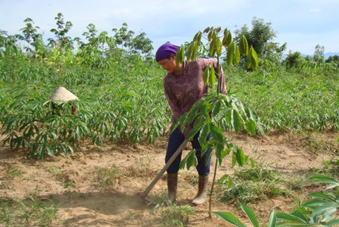 Poverty reduction project improves livelihoods in Kon Tum hinh anh 1