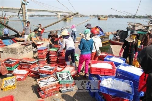 Thua Thien-Hue's fishing output surges after maritime environment incident hinh anh 1