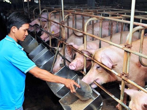 Unprofitable animal farming hurts agricultural production in Dong Nai hinh anh 1