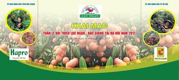 Luc Ngan lychee week opens in Hanoi hinh anh 1