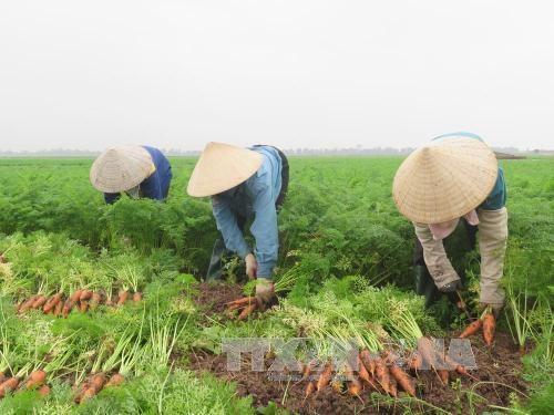 Hai Duong province calls for investment in agriculture hinh anh 1