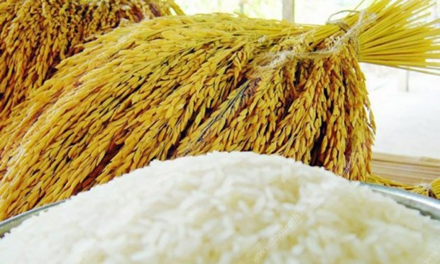Global demand for Thai rice remains high hinh anh 1