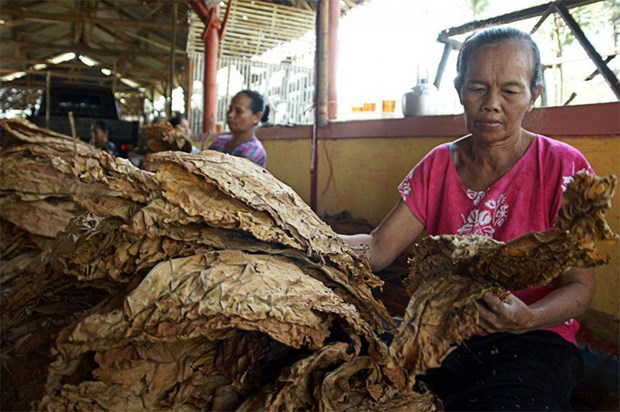 Tobacco threatens sustainable development goals of Indonesia hinh anh 1