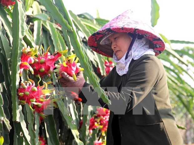 Policies hinders trading of local agricultural products hinh anh 1