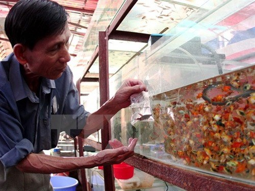 HCM City's ornamental fish export revenue up hinh anh 1
