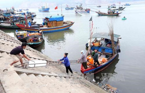 Ha Tinh to complete marine environment incident compensation in June hinh anh 1