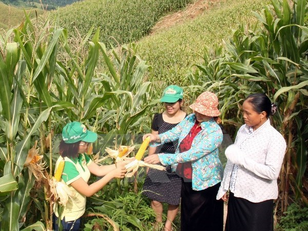 WB aids poverty alleviation programme for ethnic groups hinh anh 1