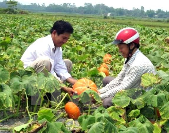 Agriculture sector targets 33 billion USD from exports in 2017 hinh anh 1