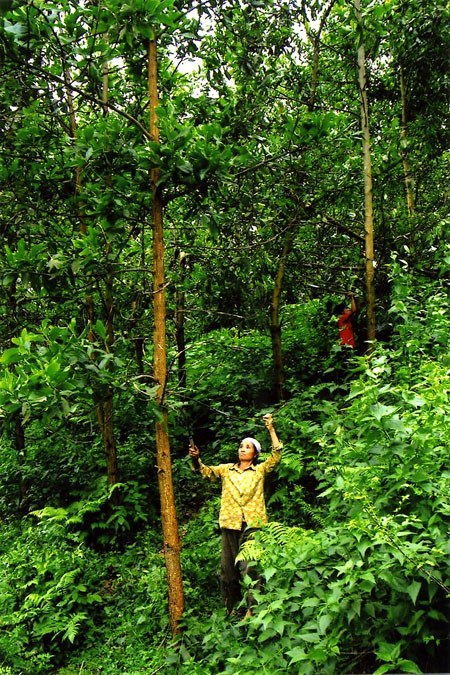 Forest funds boost northern livelihoods hinh anh 1