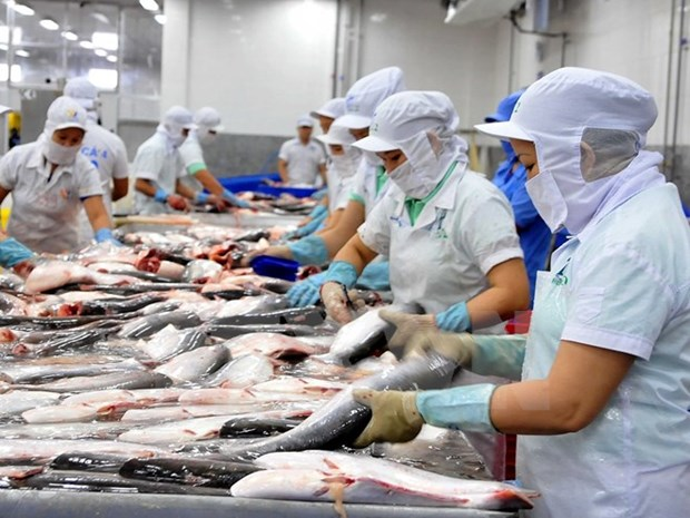 Seafood processing fuels export in Tien Giang hinh anh 1