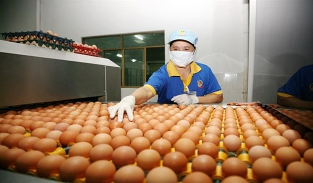HCM City plans to trace poultry origins hinh anh 1