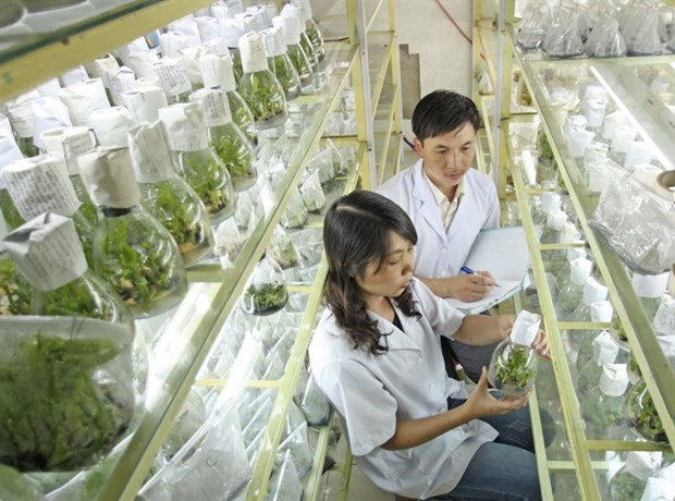 Hi-tech agriculture needs better credit policies hinh anh 1