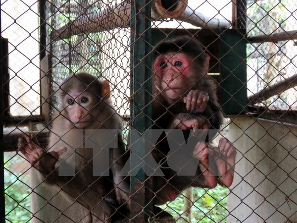 Animals released into wild in Quang Ninh hinh anh 1