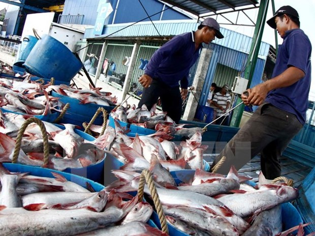 Fishery output hits 1.6 million tones in H1 hinh anh 1