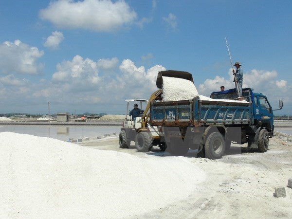 Unsold salt volume falls in first six months hinh anh 1