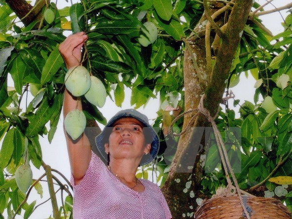 Major farm produces enjoy rise in export value despite fall in volume hinh anh 1