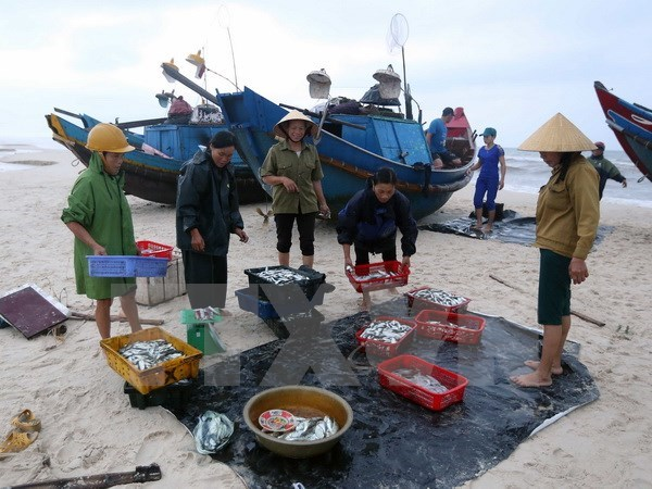 MARD: Marine environment in central region becomes stable hinh anh 1