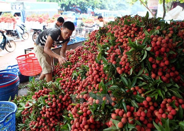 Trade minister asks for diplomats' help in expanding export markets hinh anh 1