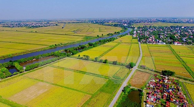 Agro-forestry-fishery exports target 35 billion USD next year hinh anh 1