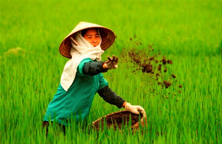 Vietnam wastes at least 1 billion USD yearly on over fertilisation hinh anh 1