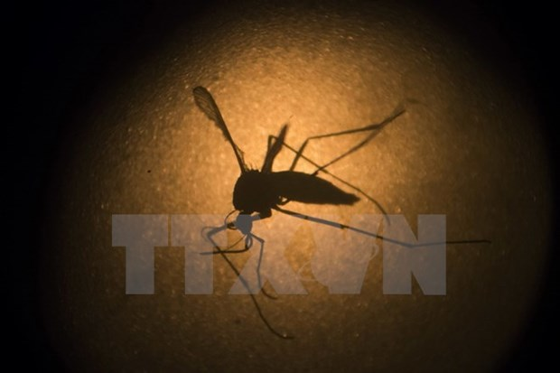 Malaysia reports 122 deaths from dengue fever hinh anh 1